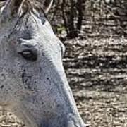 Horse With No Name V3 Art Print