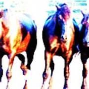 Horses-30 Art Print