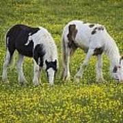 Horses Grazing, County Tyrone, Ireland Art Print