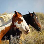 Horses In The Wild Art Print