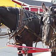 Horses Of Mackinac Art Print