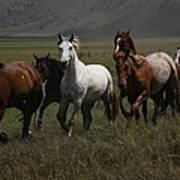 Horses Run Free Art Print