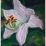 Hosta Bloom Art Print