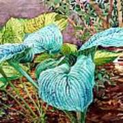Hosta Art Print by Peter Sit
