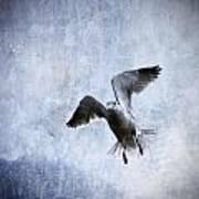Hovering Seagull Art Print