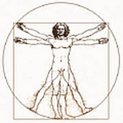 Human Body By Da Vinci Art Print