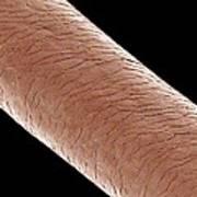 Human Hair, Sem Art Print