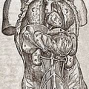 Human Male Torso, 16th Century Art Print by Middle Temple Library