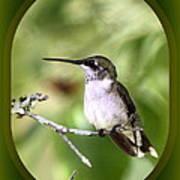 Hummingbird - Gold And Green Art Print