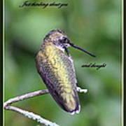 Hummingbird - Thinking Of You Art Print