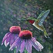 Hummingbird And Cone Flowers Art Print by Diana Shively