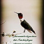 Hummingbird - Cards Art Print