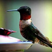 Hummingbird-male Art Print