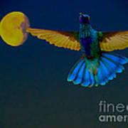 Hummingbird Moon Print by Al Bourassa