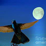 Hummingbird Moon II Art Print by Al Bourassa