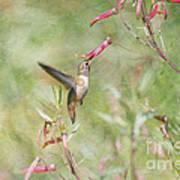 Hummingbird Nourishment Art Print