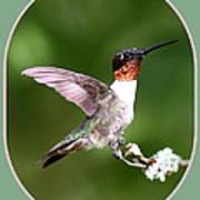 Hummingbird Photo - Light Green Art Print