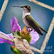 Hummingbird Picture Pretty Art Print