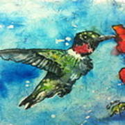 Hummingbird Sips Art Print