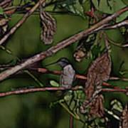 Hummingbird Waiting For Dinner Art Print