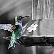 Hummingbird Wings II Art Print