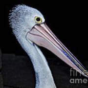 Hungry Pelican Art Print