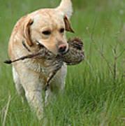 Hunting Dog Art Print