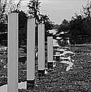 Hyacinth Pillars Art Print