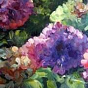 Hydrangea In Shadow Art Print