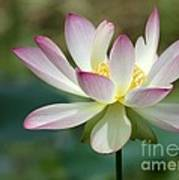 I Love Lotus Art Print