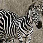 I See Stripes Art Print