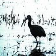 Ibis By Pintail Nature Drive Cameron Prairie Nwr La Art Print
