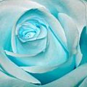 Ice Blue Rose Art Print
