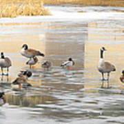 Ice Skating Geese Art Print