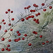 Iced Holly Art Print