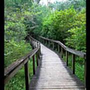 Ichetucknee Forest Pathway Art Print