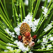 Icy Pine 1 Art Print