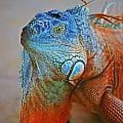 Iguana Close-up Art Print