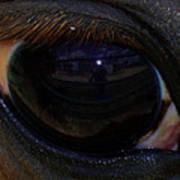Immie's Eye Art Print
