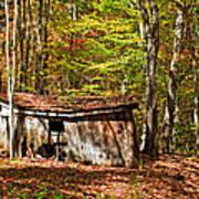 In Autumn Woods Art Print by Steve Harrington