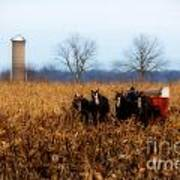 In The Corn 1 Art Print