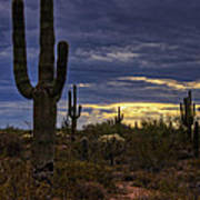 In The Shadow Of The Saguaro  Art Print