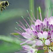 Incoming Bee Art Print