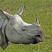 Indian Rhinoceros Art Print by Tony Camacho