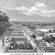Indigo Manufacture, 1869 Art Print