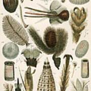 Insect Microscopy, 19th Century Art Print