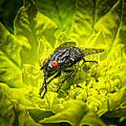 Insect Up Close - Summer Fly Sunbathing On A Yellow Perennial Garden Plant - Macro Photography Art Print