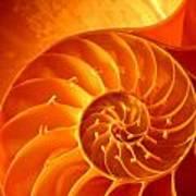 Inside A Shell Art Print