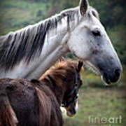 Instinct Of Love Art Print by Karen Wiles
