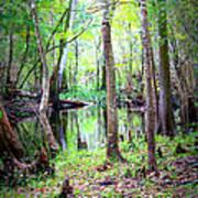 Into The Swamp Art Print